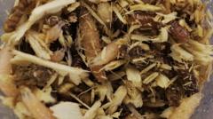 Maggots in macro Stock Footage