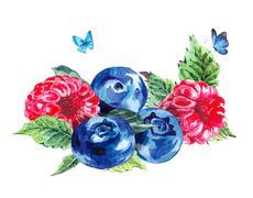 Hand painting summer watercolor raspberries blueberries - stock illustration