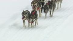 Dog sledding in Alaska, closeup aerial shot Stock Footage