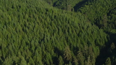 Fir trees in Oregon forest, aerial shot Stock Footage