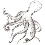 Vector sea life octopus - stock illustration
