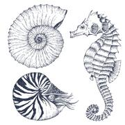 Sea life set - stock illustration