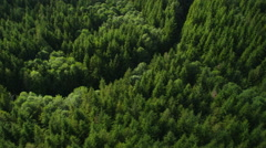 Logging in Oregon forest, aerial shot Stock Footage