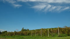 vineyard time lapse in Piedmont, Italy - stock footage