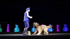 Female animal tamer performs with shagged dog on stage Stock Footage