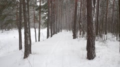 Snowfall with wind in pine forest on a winter day. Stock Footage