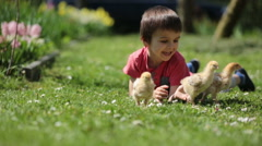 Adorable preschool child, boy, playing with little chicks in a garden Stock Footage