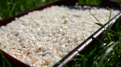 Jasmine petals lay on a tray. Stock Footage