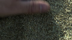 Planting Grass Seed in Back Yard Stock Footage