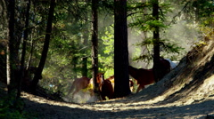 Horses running in Roundup on Dude Ranch with Cowboy Riders - stock footage