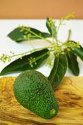 Fresh green avocados with leaves on olive wood Stock Photos