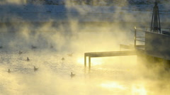 Duck Swimming. Duck on the Water. Steam Over the Water. Vanilla Sky. Industrial Stock Footage
