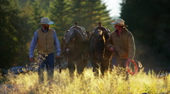 Working ranch hands walking horses in forest valley Canada Stock Footage