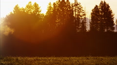 Silhouette of Cowboy Rider in sunset wilderness Canada Stock Footage