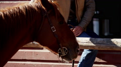 Cowboy Ranch hand bonding with horse on Dude Ranch USA - stock footage