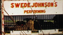 1967: Swede Johnson's performing circus tiger behind iron bars. Stock Footage