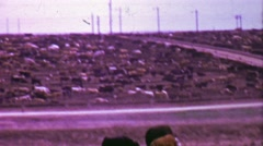 1964: Cow factory farm stockades fenced in animals. Stock Footage