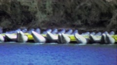 1964: Inflatable river rafting kayaks beached on water banks. - stock footage