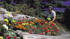 1961: Women gardening flower bed peeking out of rocky landscape. Stock Footage
