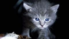Little kittens on walk close up Stock Footage