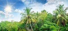 Coconut palms lit bright sun - stock photo