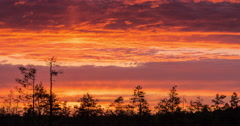 Time lapse of colorful sunset over marshland treeline Stock Footage