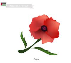 Red Poppies, The Popular Flower of Palestine Stock Illustration