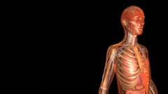 Human Anatomy - stock footage