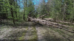 Slowly lifting up a big tree trunk and moving it  Stock Footage