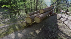 Slowly lifting up a big tree trunk Stock Footage