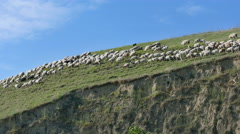 Agriculture sheep flock at berg Stock Footage