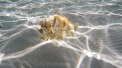 Seashell under water Stock Footage