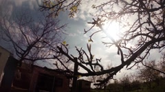 Bunches of Leaves on a Branch of Pear Under Bright Sun Panorama From Left to Stock Footage