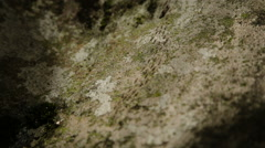 Many ants move the stone Stock Footage