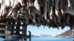 Cod drying on the beach. Stock Footage