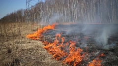Dry grass burning in park on glade under power lines. Stock Footage
