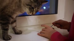 Girl hands feeing cat on window sill from spoon and jar close up. Stock Footage