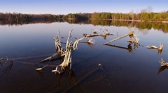 Gliding over wilderness lake with dead trees at daybreak - stock footage