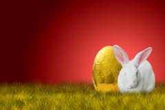 Easter bunny and golden egg - stock photo