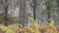 Panning shot of ferns in forest in autumn colours - stock footage