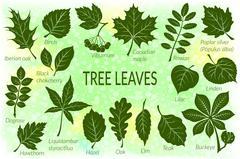 Leaves of Plants Pictogram Set Stock Illustration