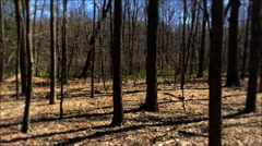 Forest Camera Spin Stock Footage