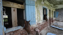 Horse in vintage stable Stock Footage
