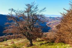 Autumn Carpathian view. Stock Photos