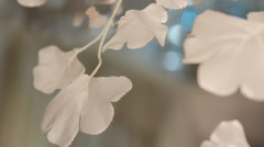 White petals on a blurred background of iridescent Stock Footage