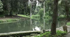 Tropical forest with river in Cuba Stock Footage