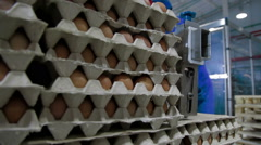 Transportation Eggs for automated sorting - stock footage