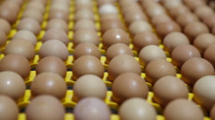 Transportation industrial plant selection for egg Stock Footage