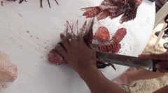 Lionfish  are being prepared for dinner Stock Footage