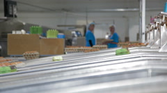 Eggs on the production line Stock Footage